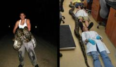 19-Foot Python Killed In Florida Sets New Record