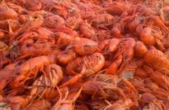 crawfish fest got its start in butler